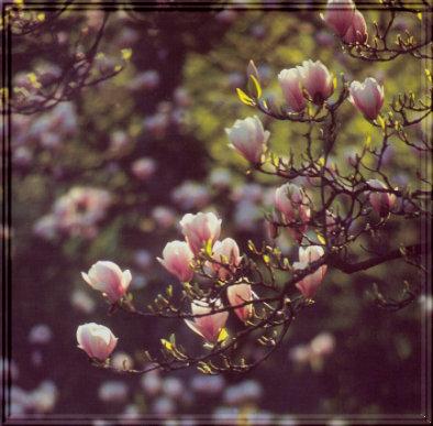 Alles Neue braucht seine Zeit - wie eine Blüte,sich in voller Pracht zu entfalten.